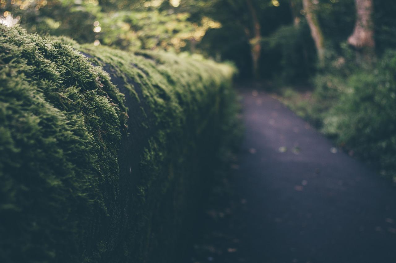 Chemin-Buisson