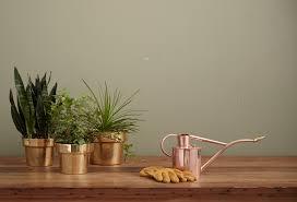 Déco naturelle : quelques plantes d'intérieur faciles d'entretien