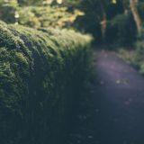 Comment éradiquer la pyrale du buis et préserver un environnement bio