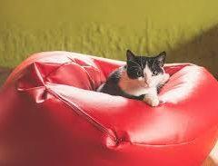Les poufs : comment choisir ses meubles décoratifs et pratiques