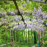 Les plantes parfumées incontournables du jardin