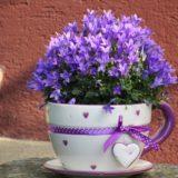 Recycler les pots de fleurs
