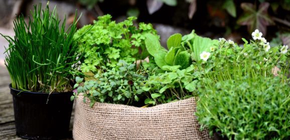 Trois sortes de plantes aromatiques à faire pousser dans son jardin